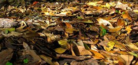 Leaf Mulch for Winter