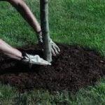 Properly Mulching a Tree